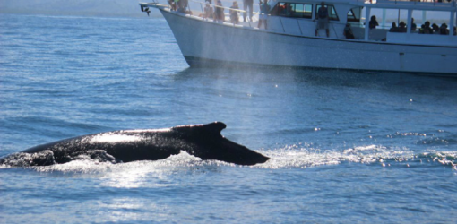 Whale Tour From Puerto Plata