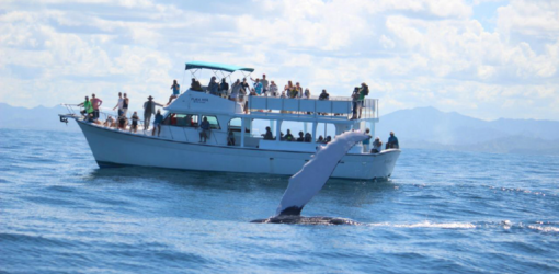 Whale Tour from Santo Domingo